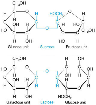 Effect of alcohols on lactose solubility.